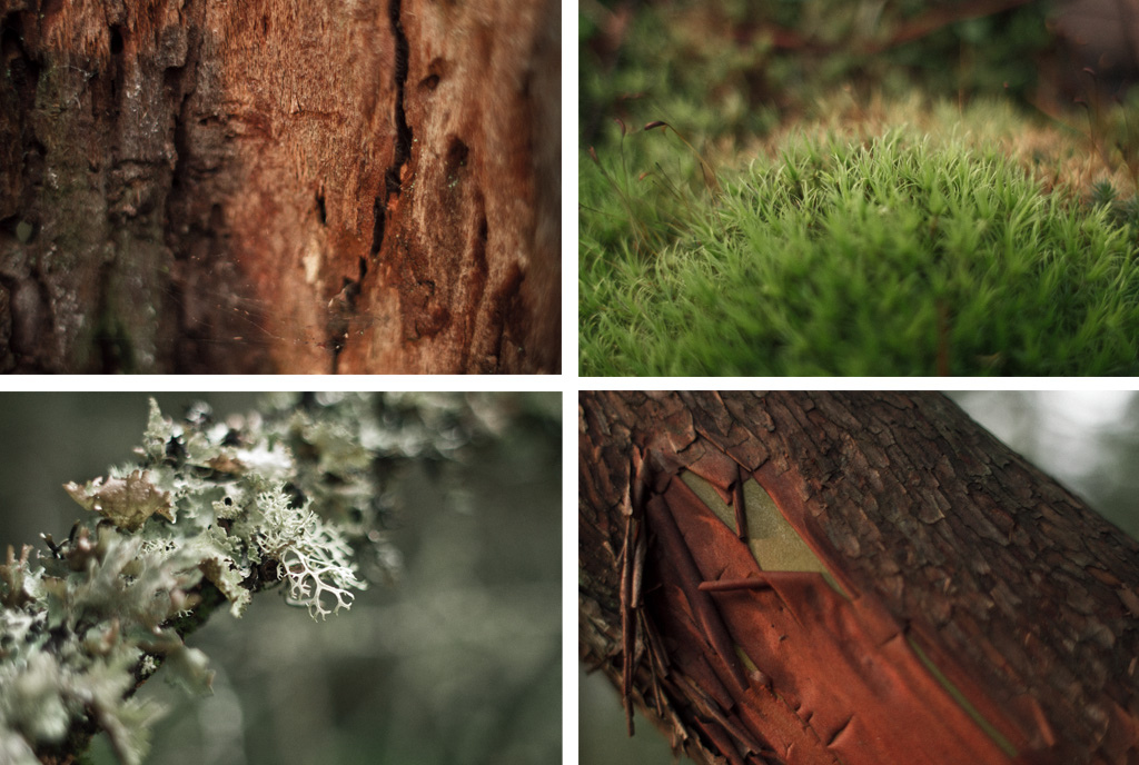 Various bark and moss species.