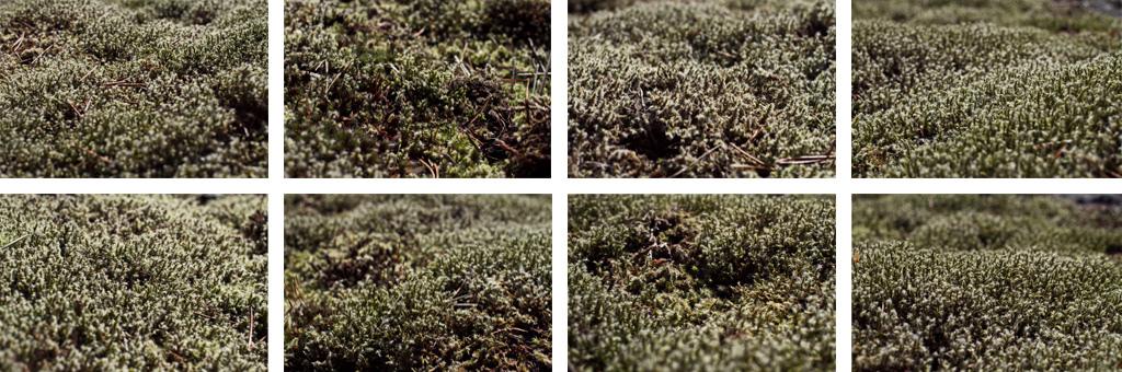 Varieties of terrain but one species of moss.