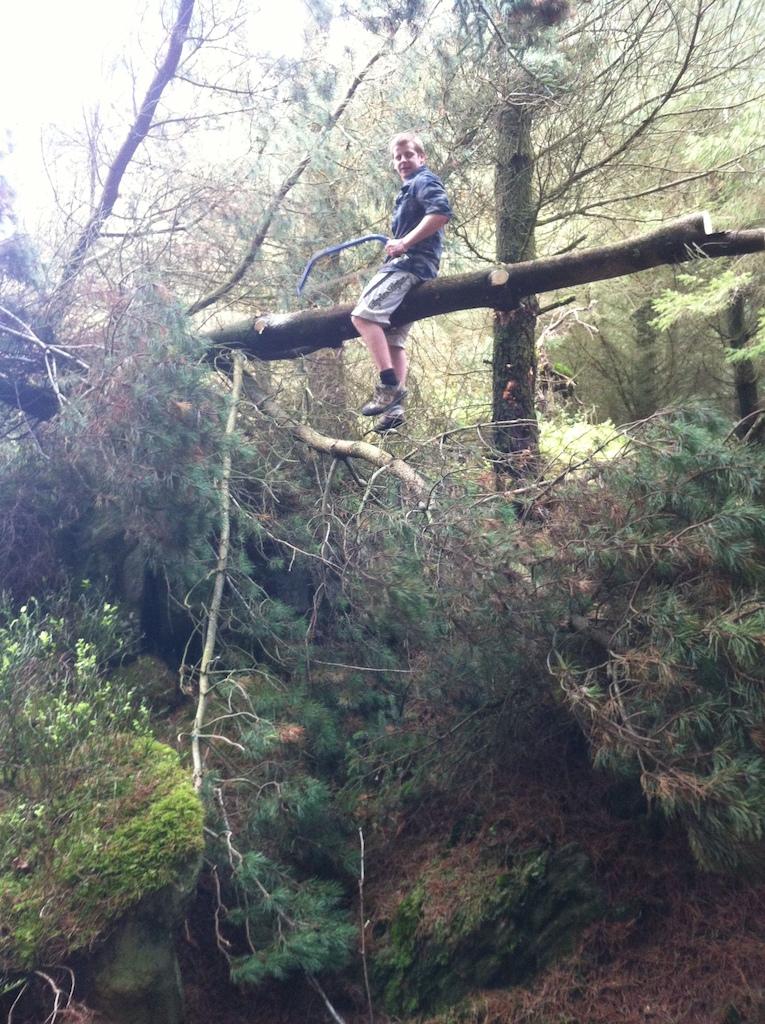 yep, up a tree