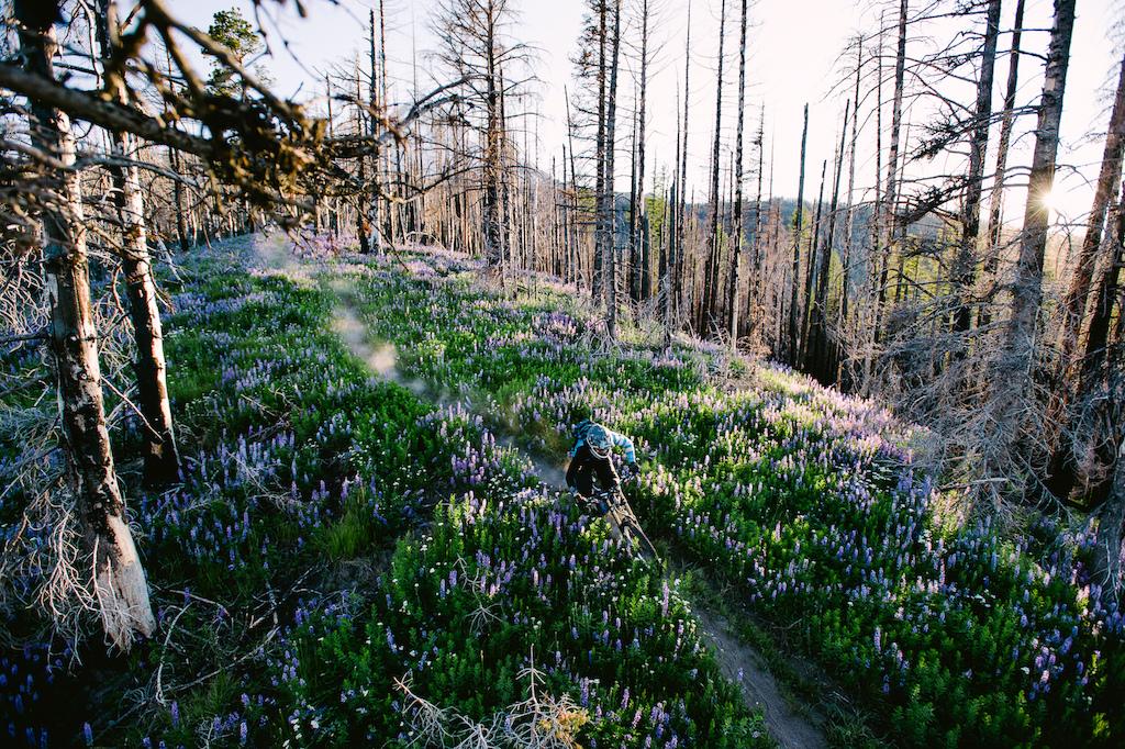 Biking on some single track below Mount Hood