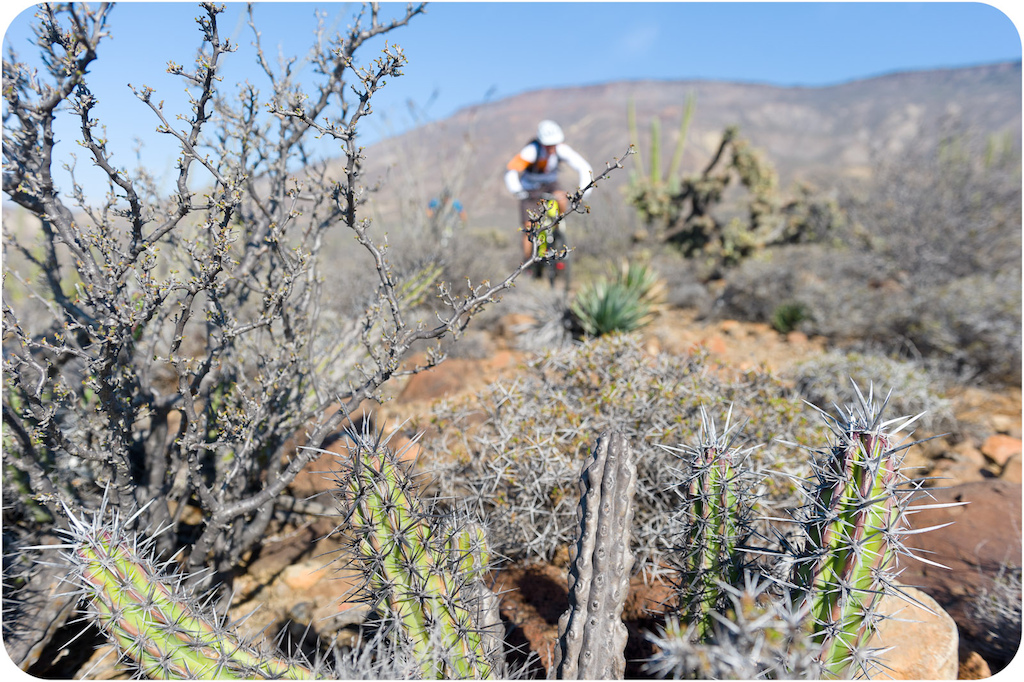 Brian Lopes rides through the cactus at Punta San Carlos.