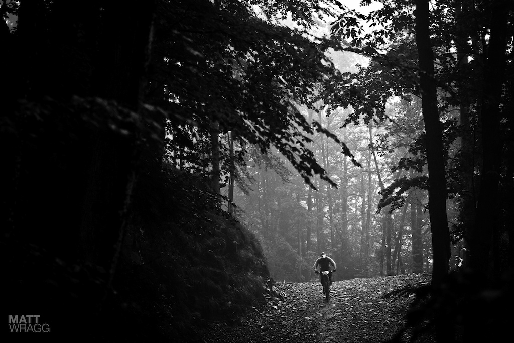 Atmospheric forest shot.