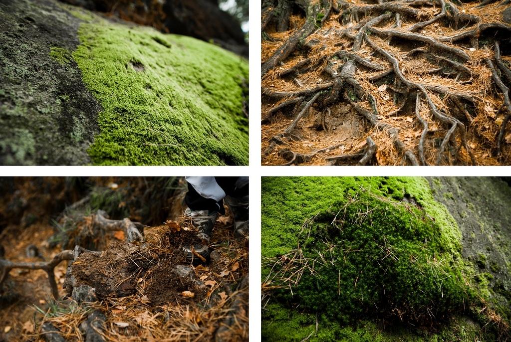 Roots moss amp tree needles photo by www.wolisphoto.com