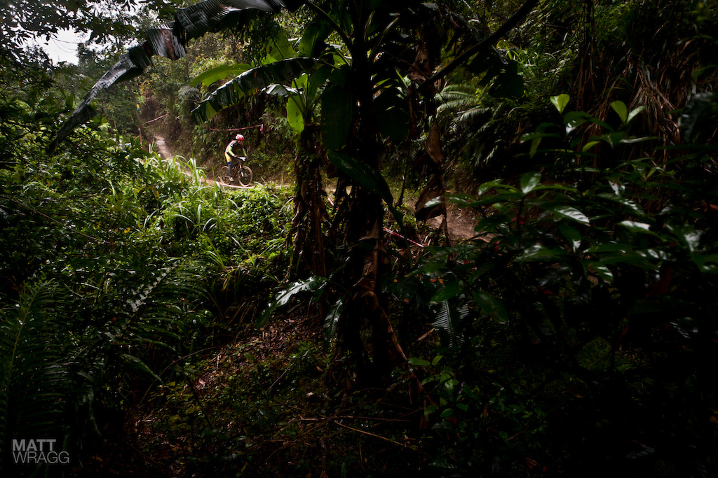The only way to describe much of the vegetation along the track was jungle.