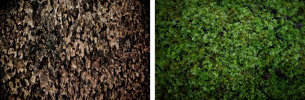 Ancient first growth fir tree. Dark ruddy brown. Ancient moss. Bright alien green.
