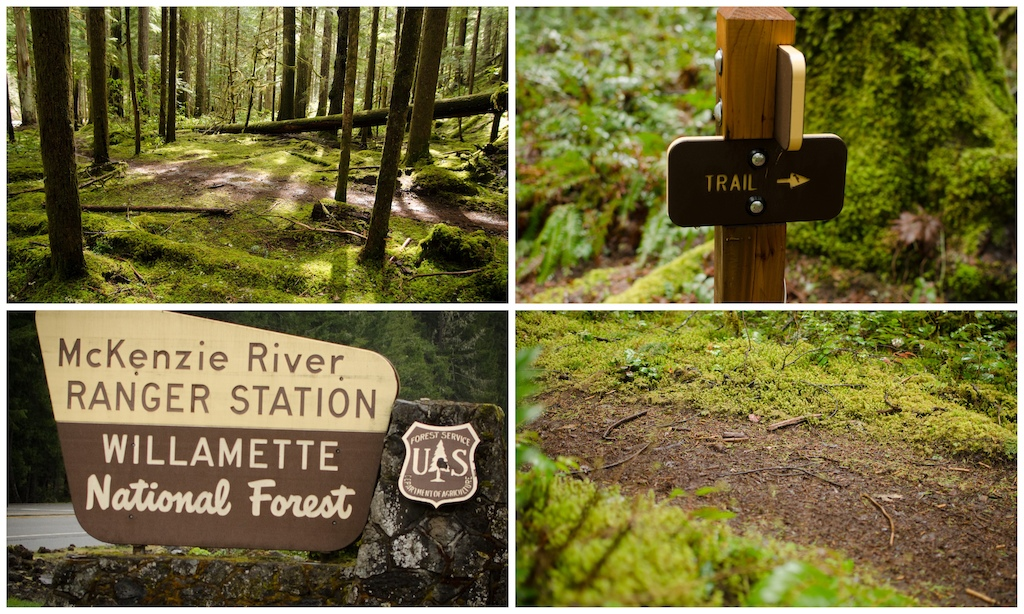 The McKenzie River Trail is located in the Willamette National Forest east of Eugene Oregon. The trail gradually makes its way downhill over the course of 25 mies passing through stands of old growth Douglas Fir and past lush moss and prehistoric looking ferns.