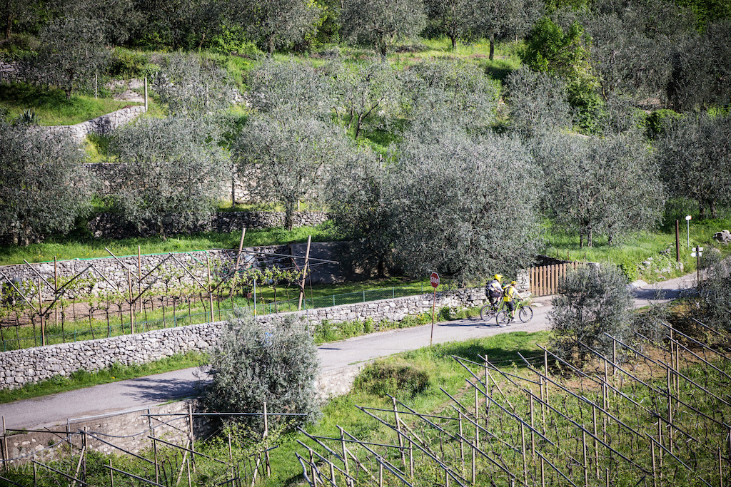 Riders climbed up from the start through the olive groves and vineyards.