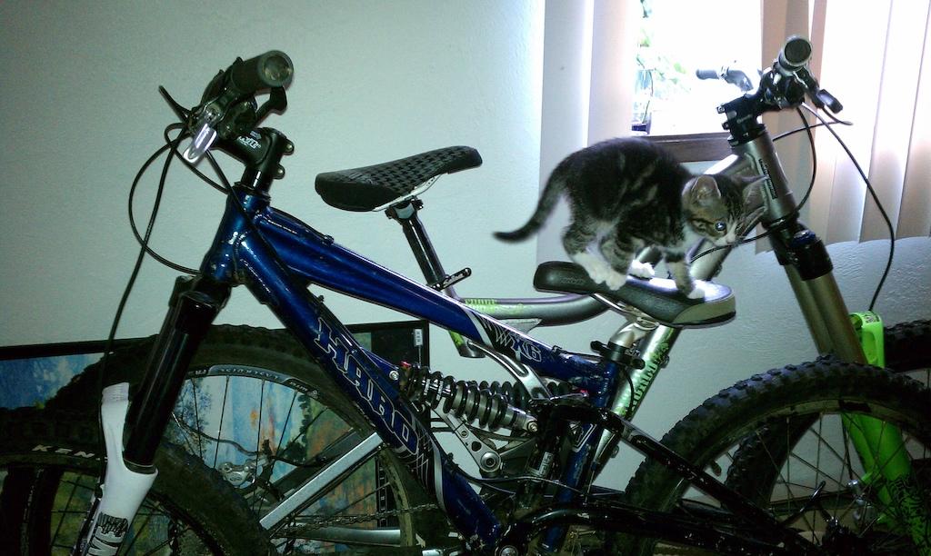 Kitties dream of shredding too...