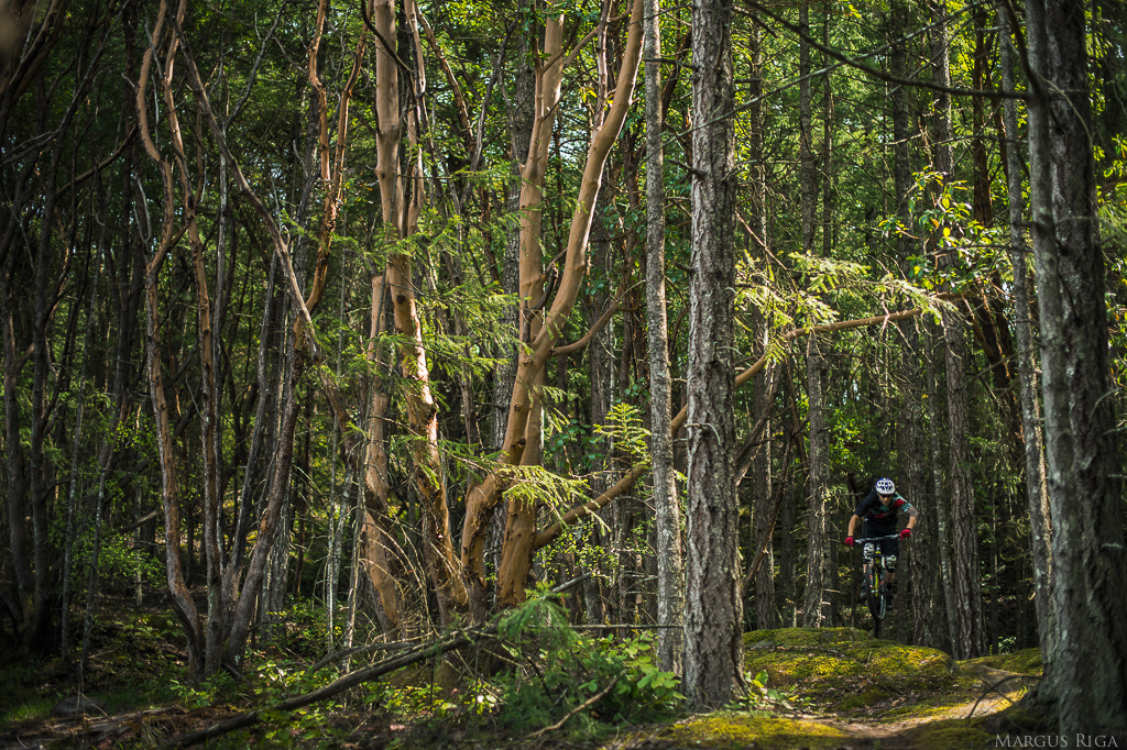 Geoff Gullevich roaming amongst the Arbutus trees on Maple Mountain near Duncan BC.