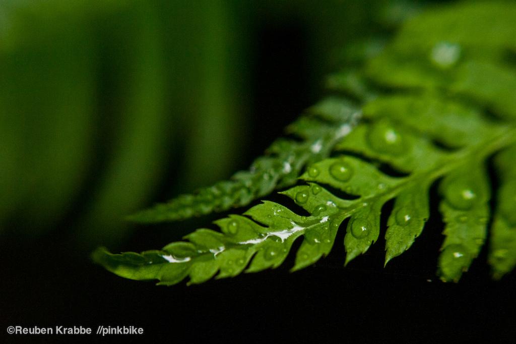 Sumas Mountain foliage