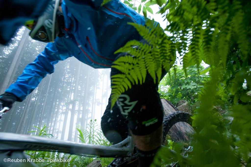 Stephen Matthews brushing ferns sumas