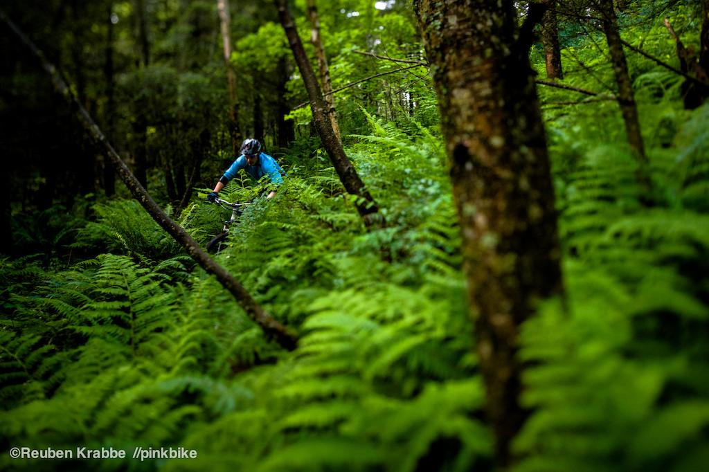 Stephen matthews deep in coastal rainforest. sumas moutnain