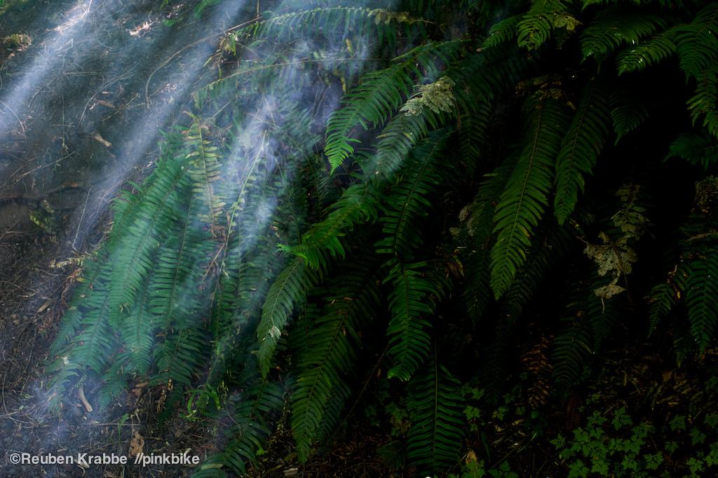 campfire smoke drifts through coastal rainforest ferns