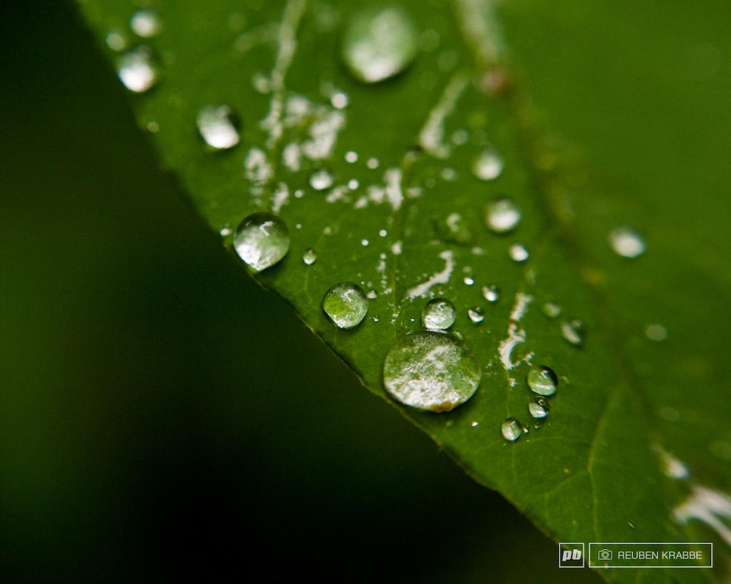 Rain forest. Rainforest