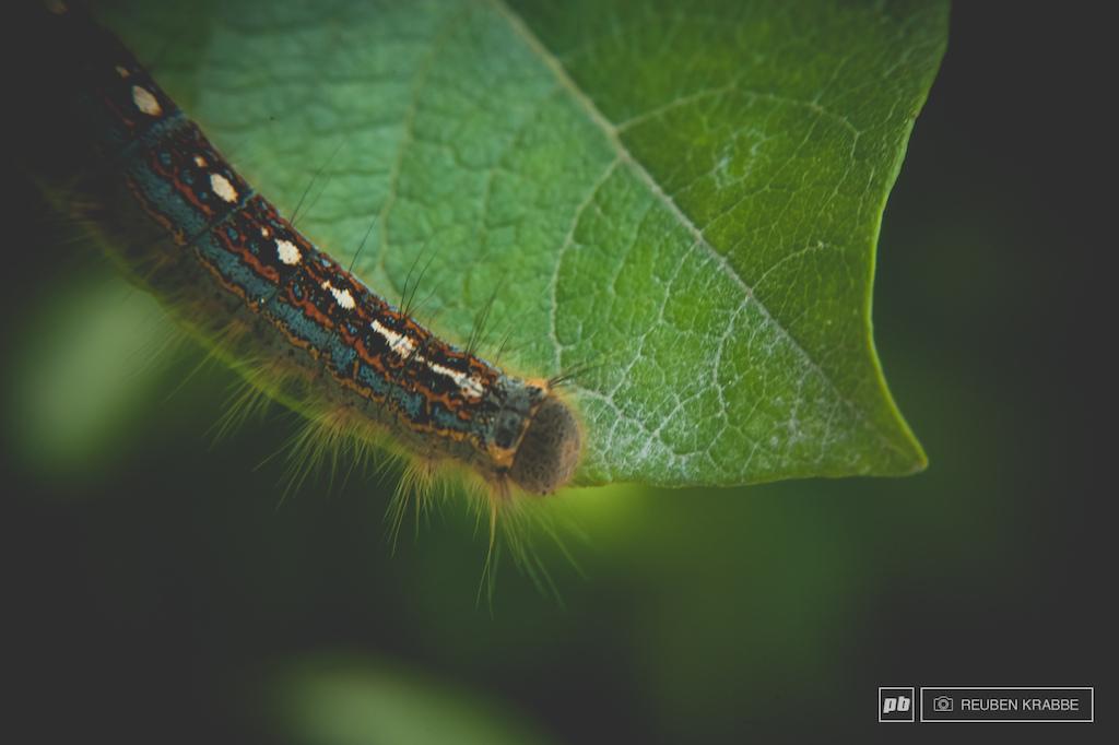 Butterfly apprentice
