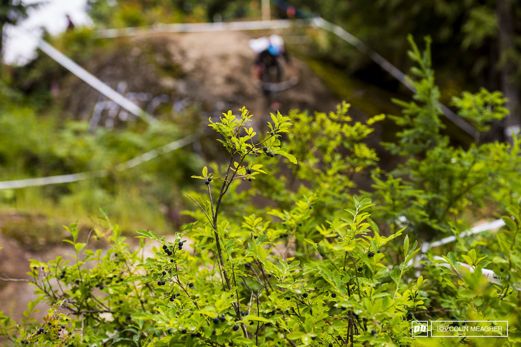 Course side nuggets... It s not just for the bears lurking on Whistler mountain.