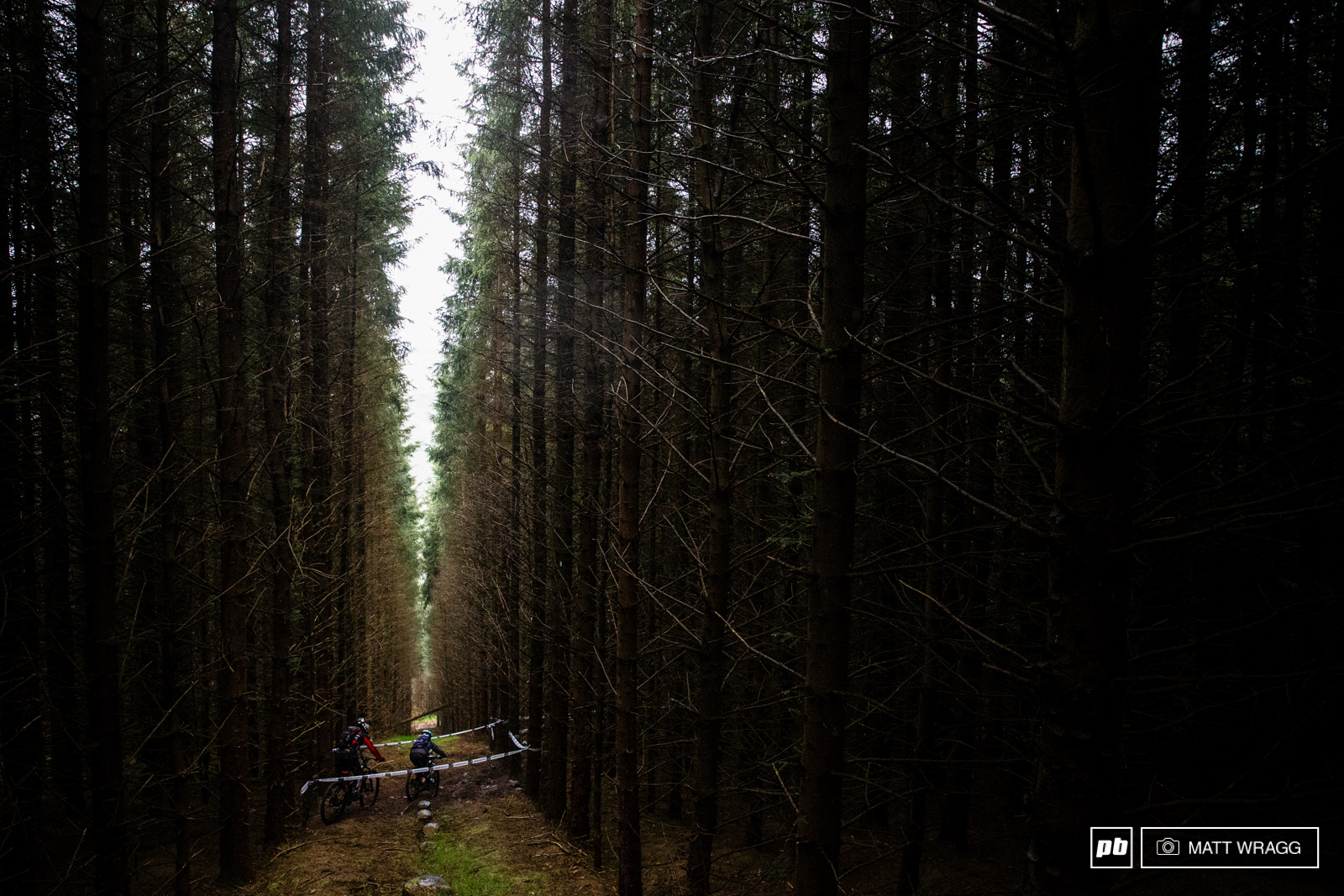 Riders pass through the clear cut in the dark dense forest on stage four.
