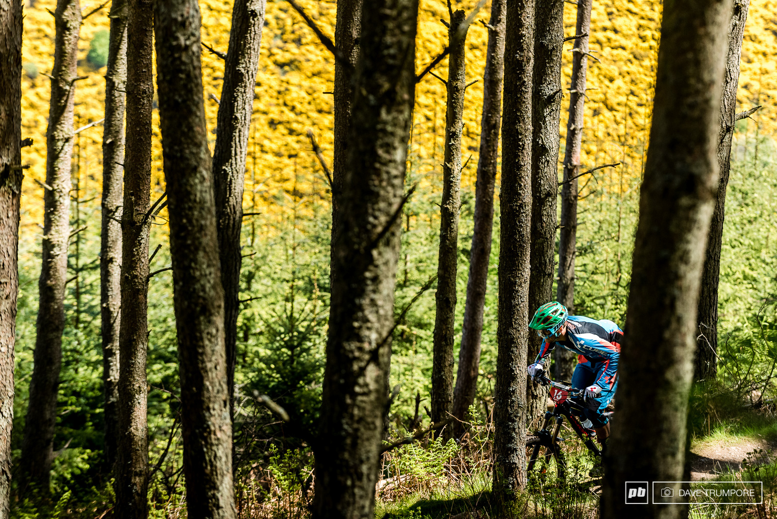 Greg Callaghan weaving through the tight trees on stage one