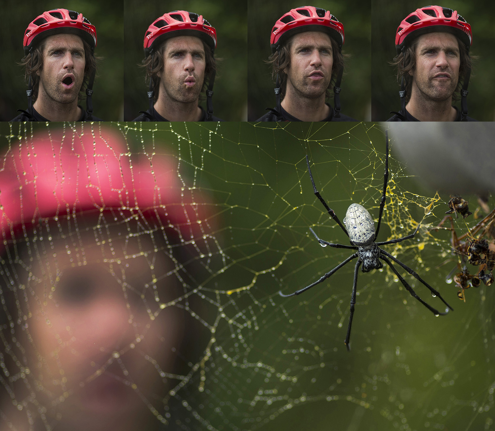 Cam McCaul doesn t like large spiders