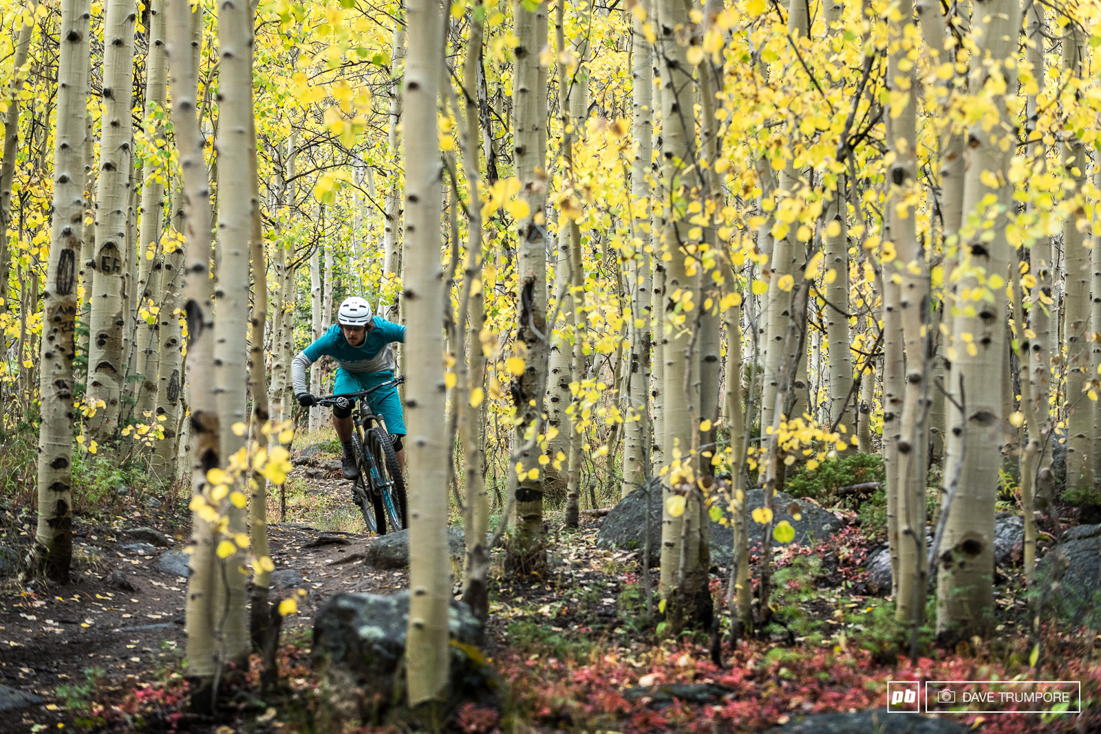 With so much focus on high peaks we almost forgot how much fun zipping through the trees can be.