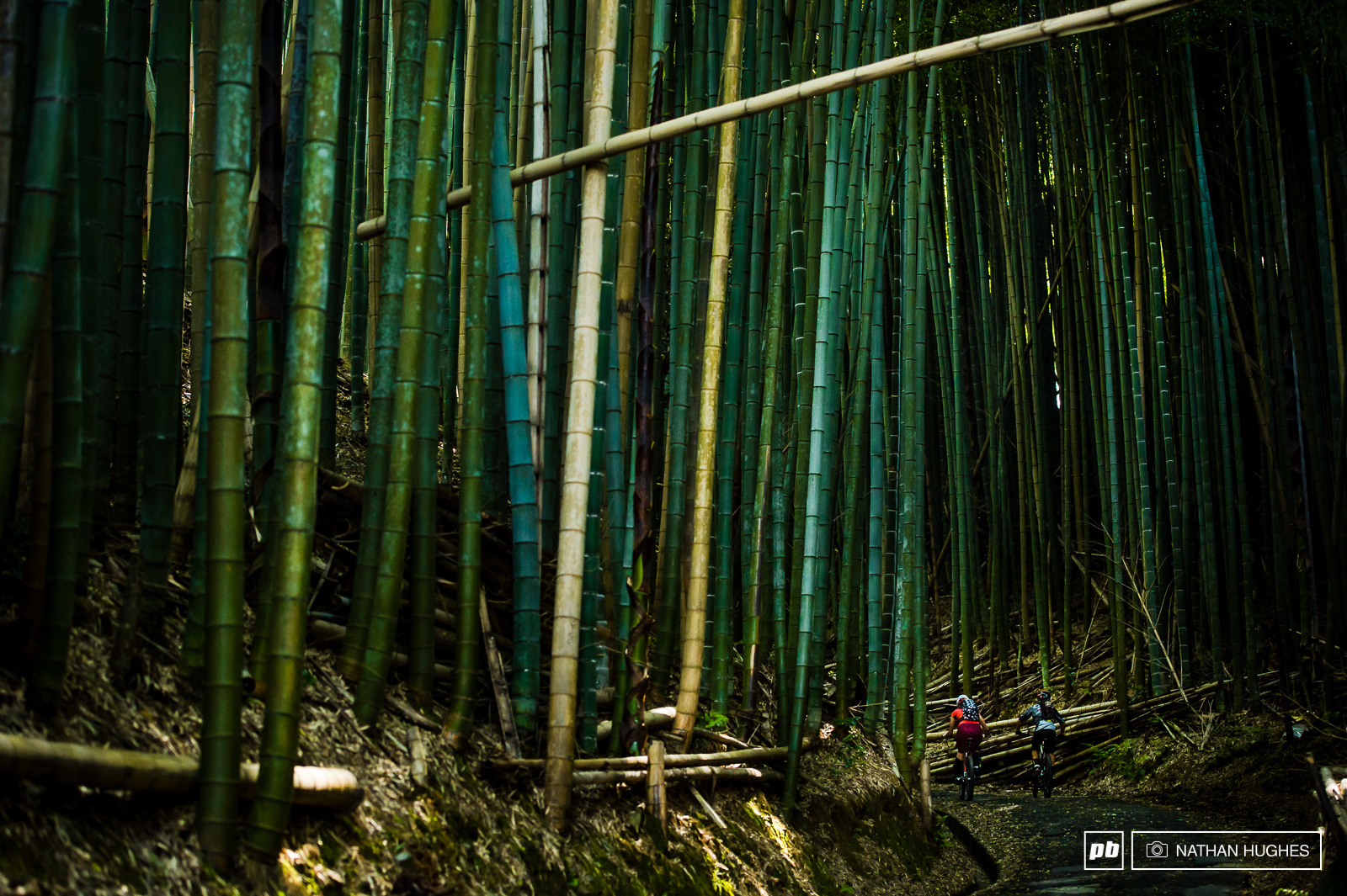 Steff and Bernado head to the trails in Kyoto s bamboo forest.