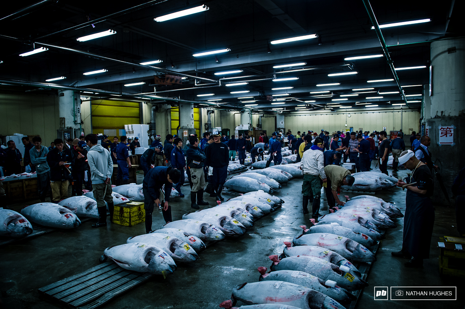 5 00am at the harbour in Tokyo and just in time for the auction of some gigantic torpedos of frozen tuna.