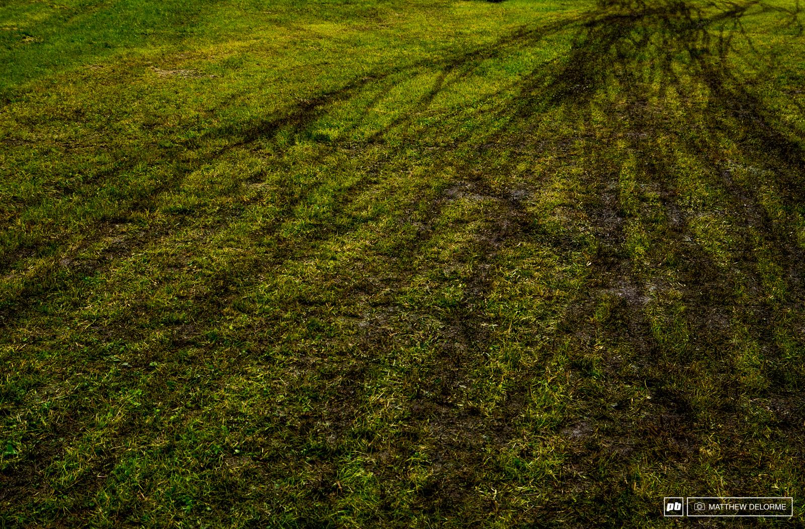 First tracks on fresh grass.