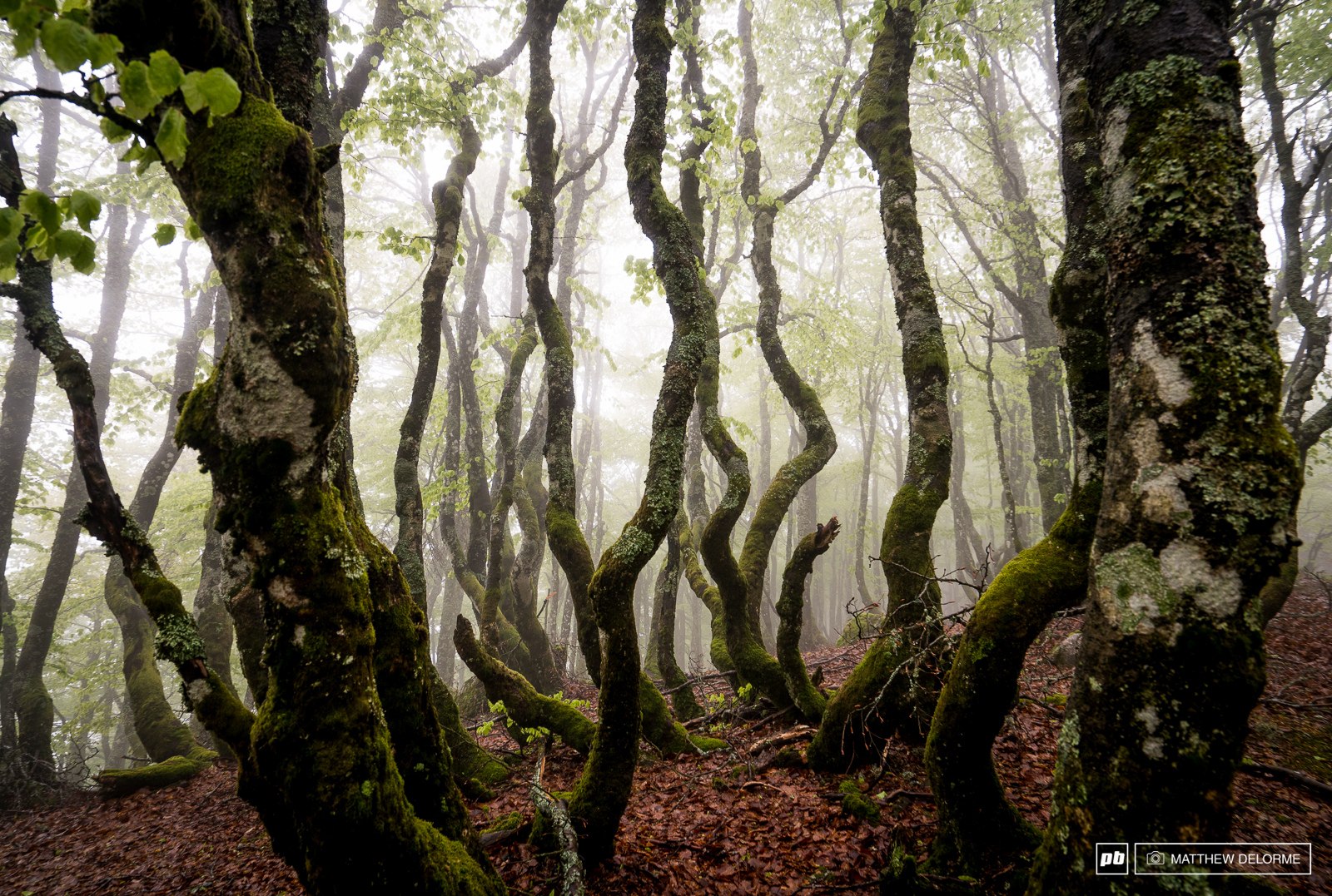 La Bresse has some beautiful woods. The twisted tress of the alpine are enchanting when they are cloaked in fog.