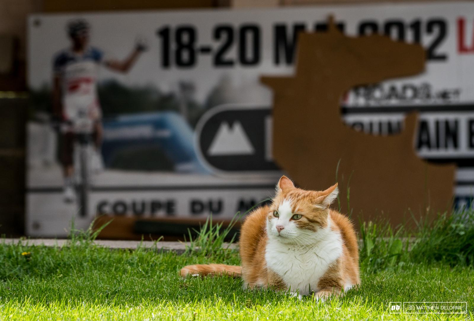 Kitty keeps guard of the vintage 2012 Julien Absalon WC board.