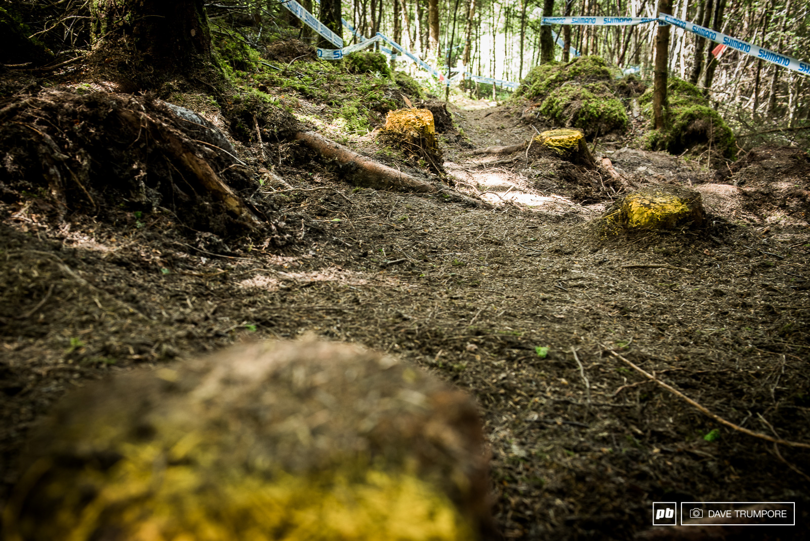 We have a new woods section this year littered with stumps and filled with perfect loamy hero dirt.