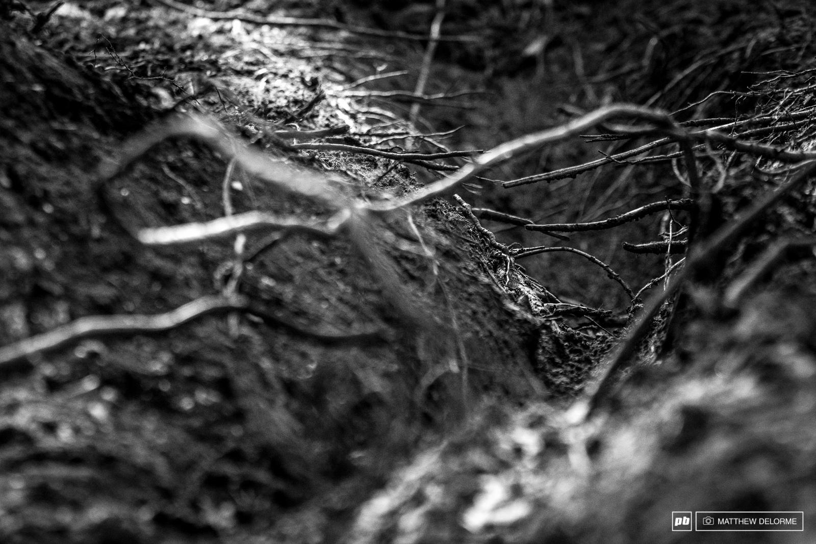 Fresh ruts burnished roots.