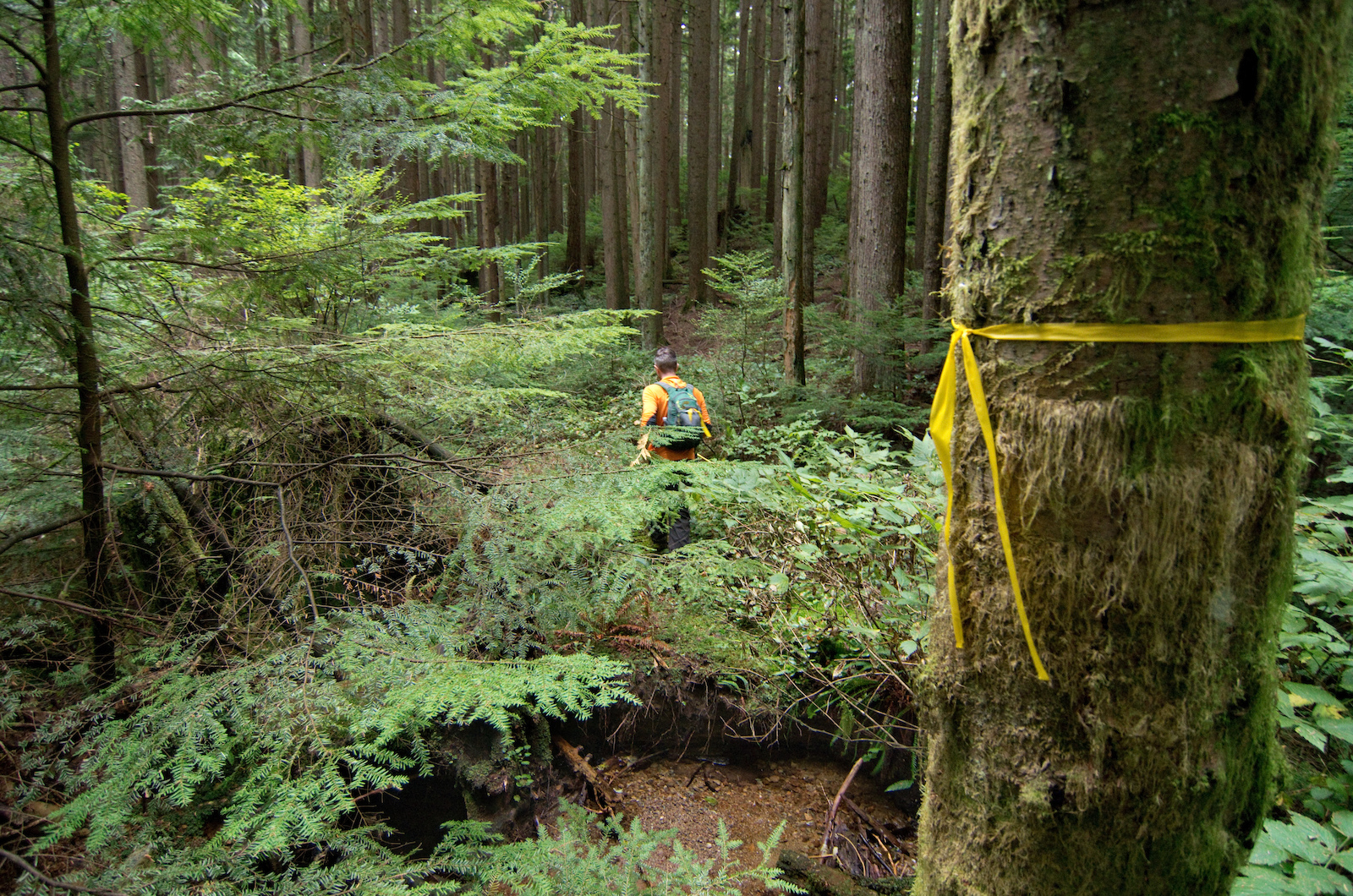 October 13 2014 The creek crossing was the only part of the trail that didn t change location over the course of the build.
