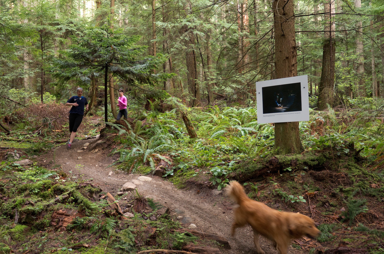 These climbing trails are popular with runners because the slight grade is easy on their knees and when they encounter a rider it s always at a low speed.