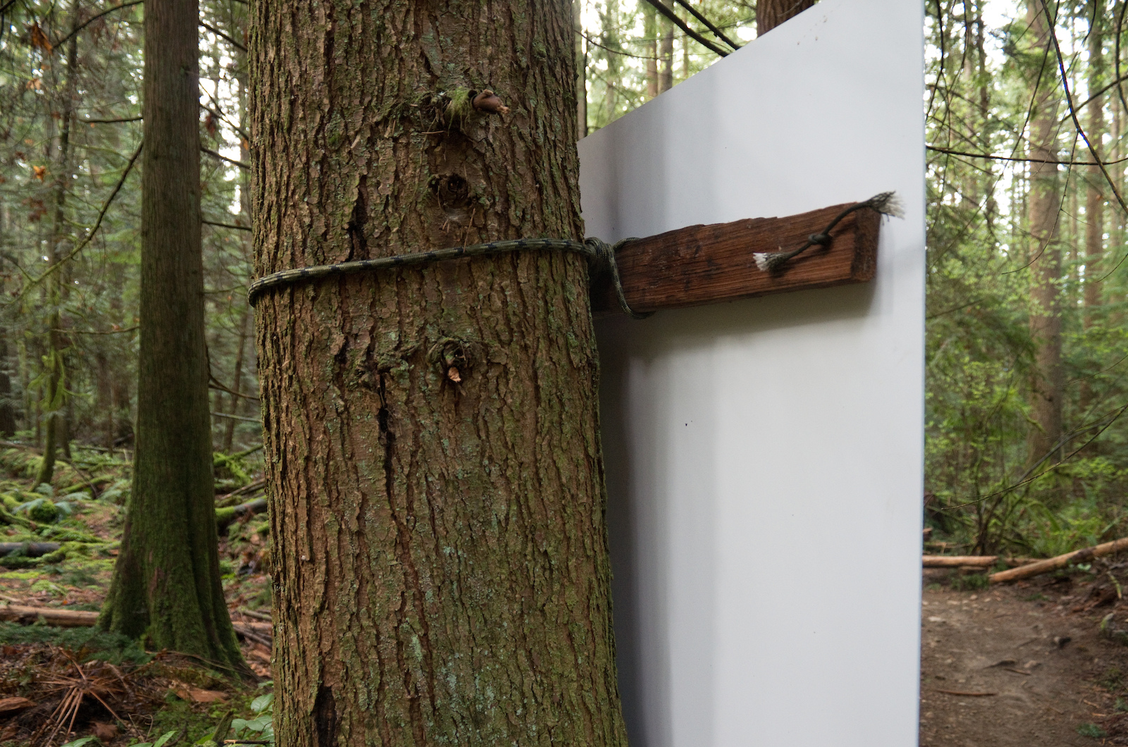 For the installation we didn t want to nail anything to live trees so Martin and Penny devised a solution where a slat was tied to the tree and the print was tied to the slat.