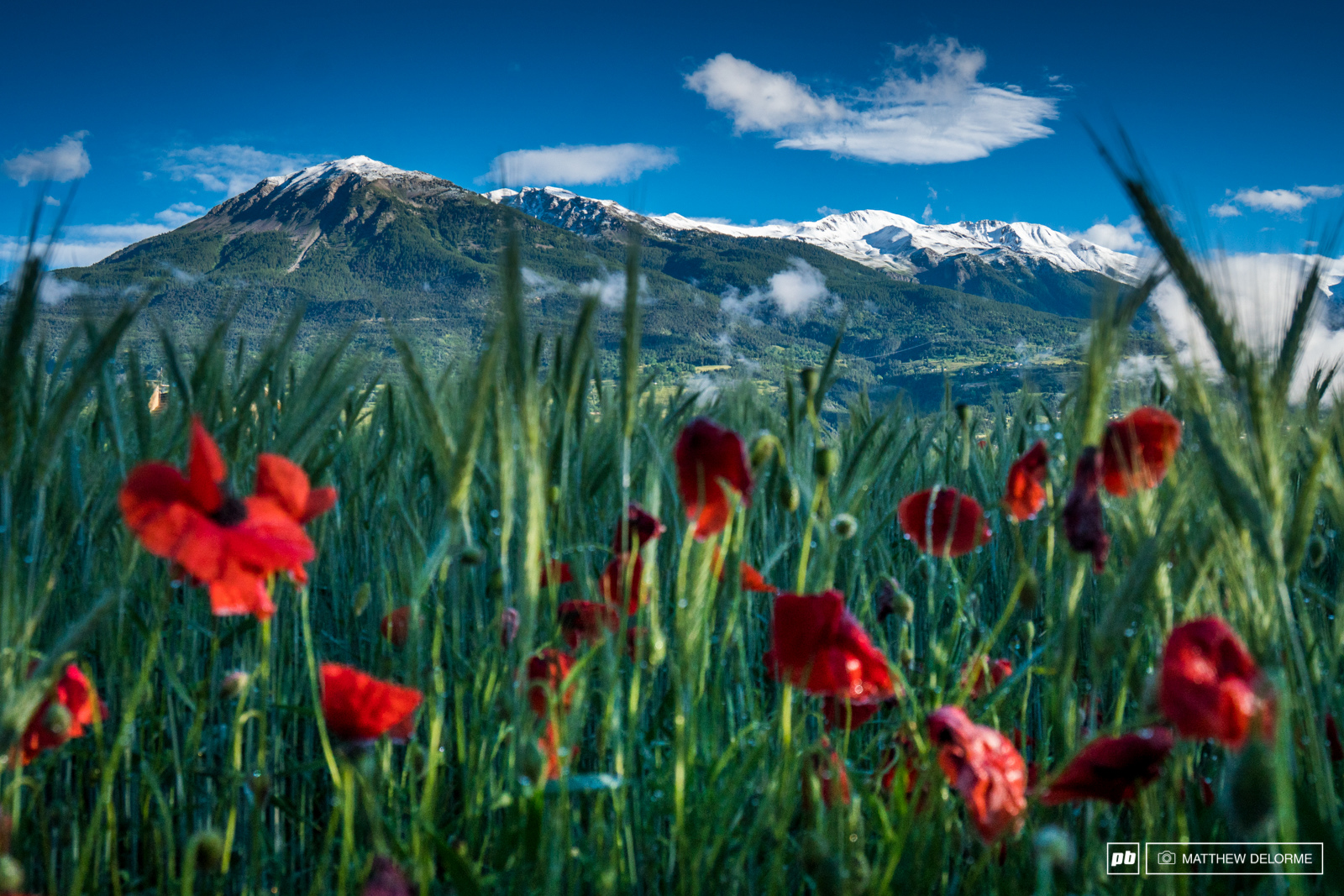Red poppies and snow covered mountain tops. We were about to travel over 200 kilometers and will visit all four seasons. It s time to get pedaling.