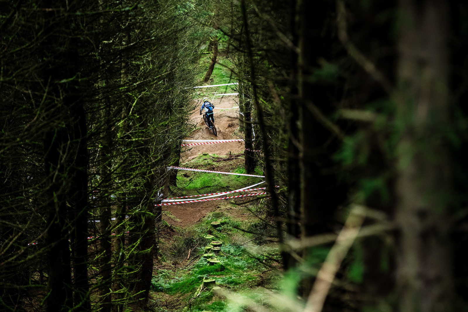 Danny Hart snaking his way through the trees of Revolution.
