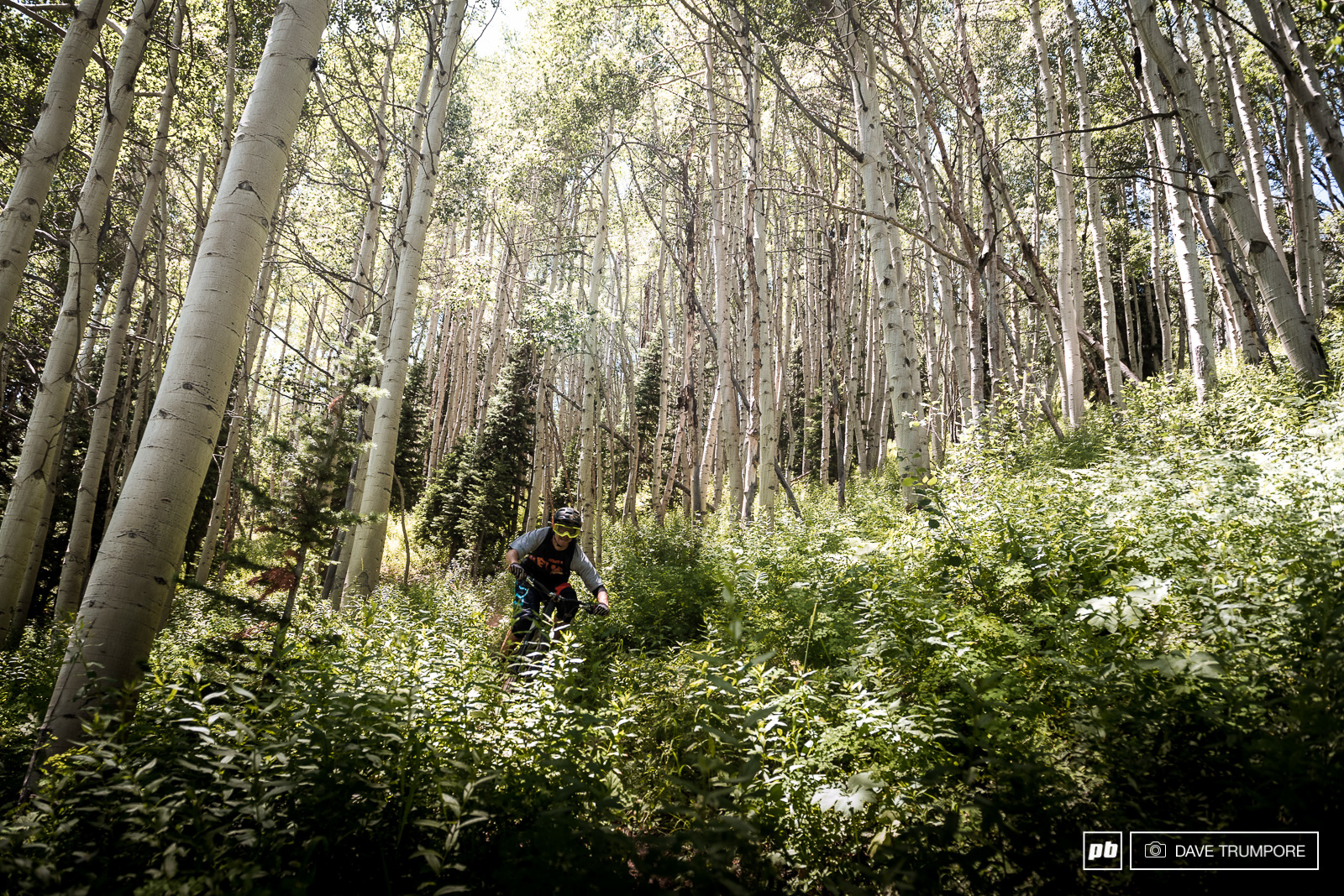 It s pretty hard to beat the feeling of fast flow sigletrack through a grove of aspen trees. Luckily there are plenty section like this on just about every stage.