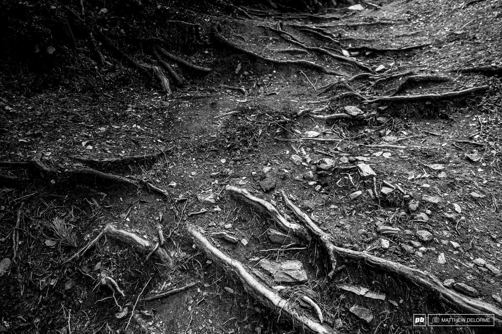Plenty of roots on this steep Andorra track.