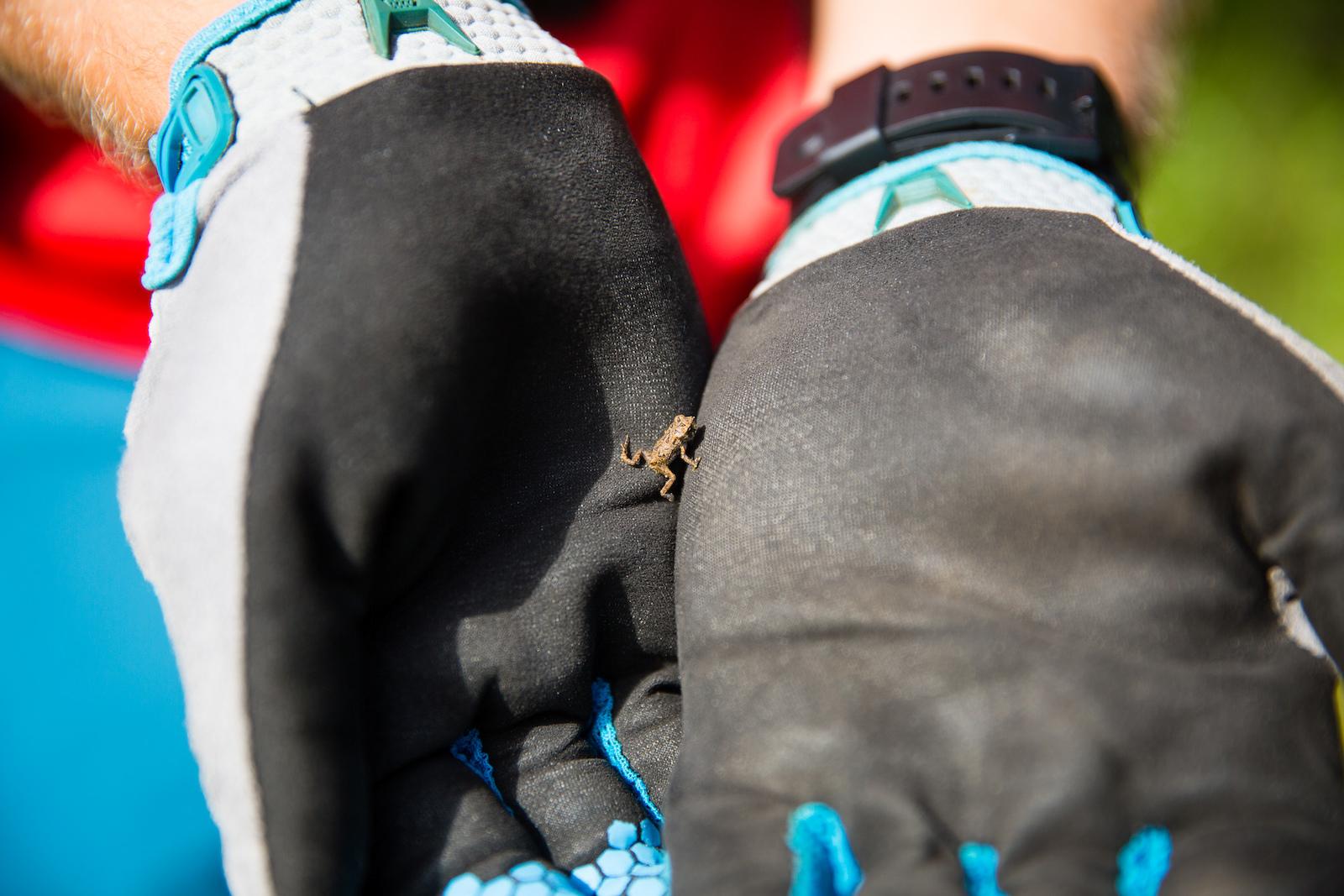Fragile frogs alongside the trail in Vall e Bras-du-Nord. PHOTO Ben Gavelda