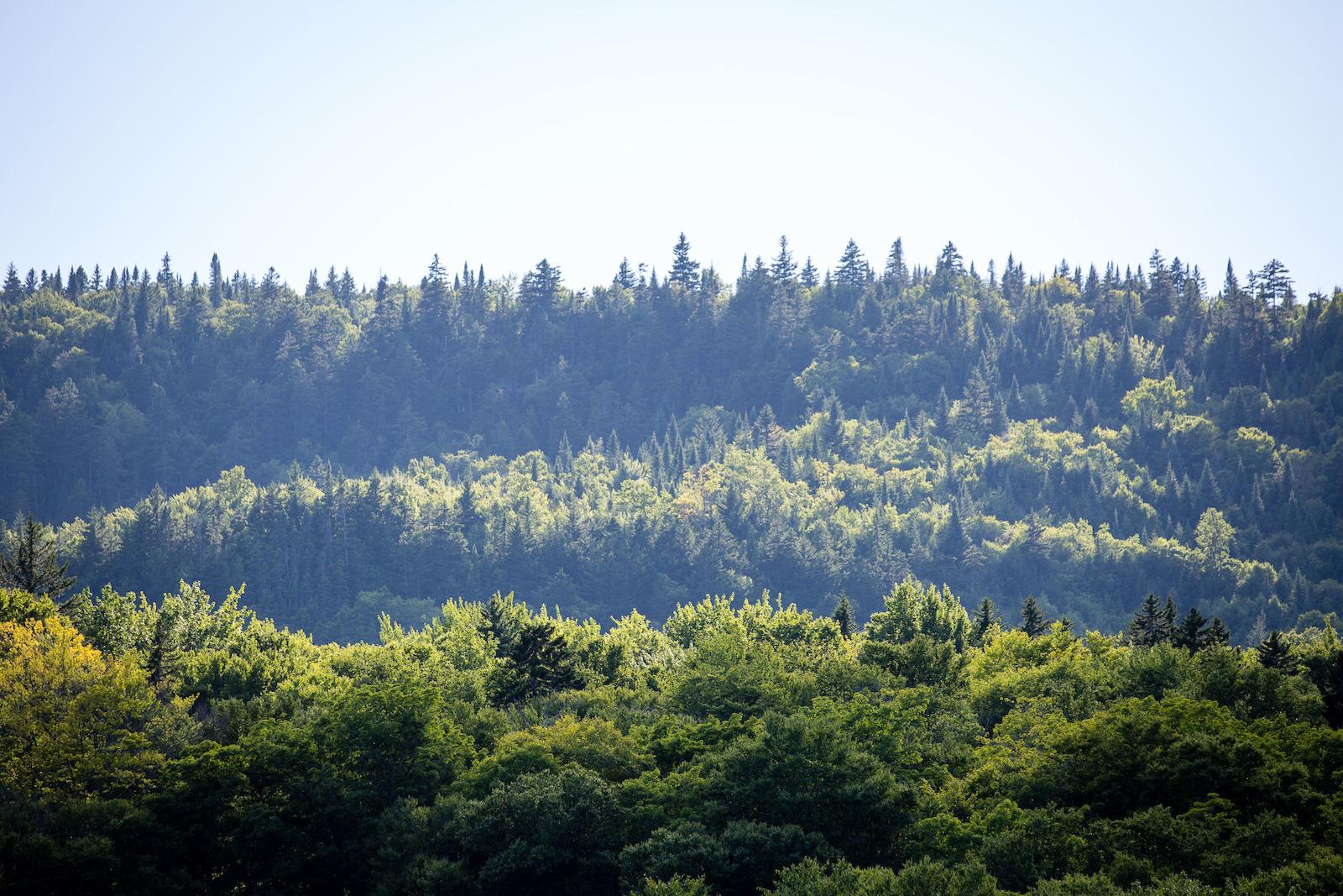 Forests for forest s sake. PHOTO Ben Gavelda
