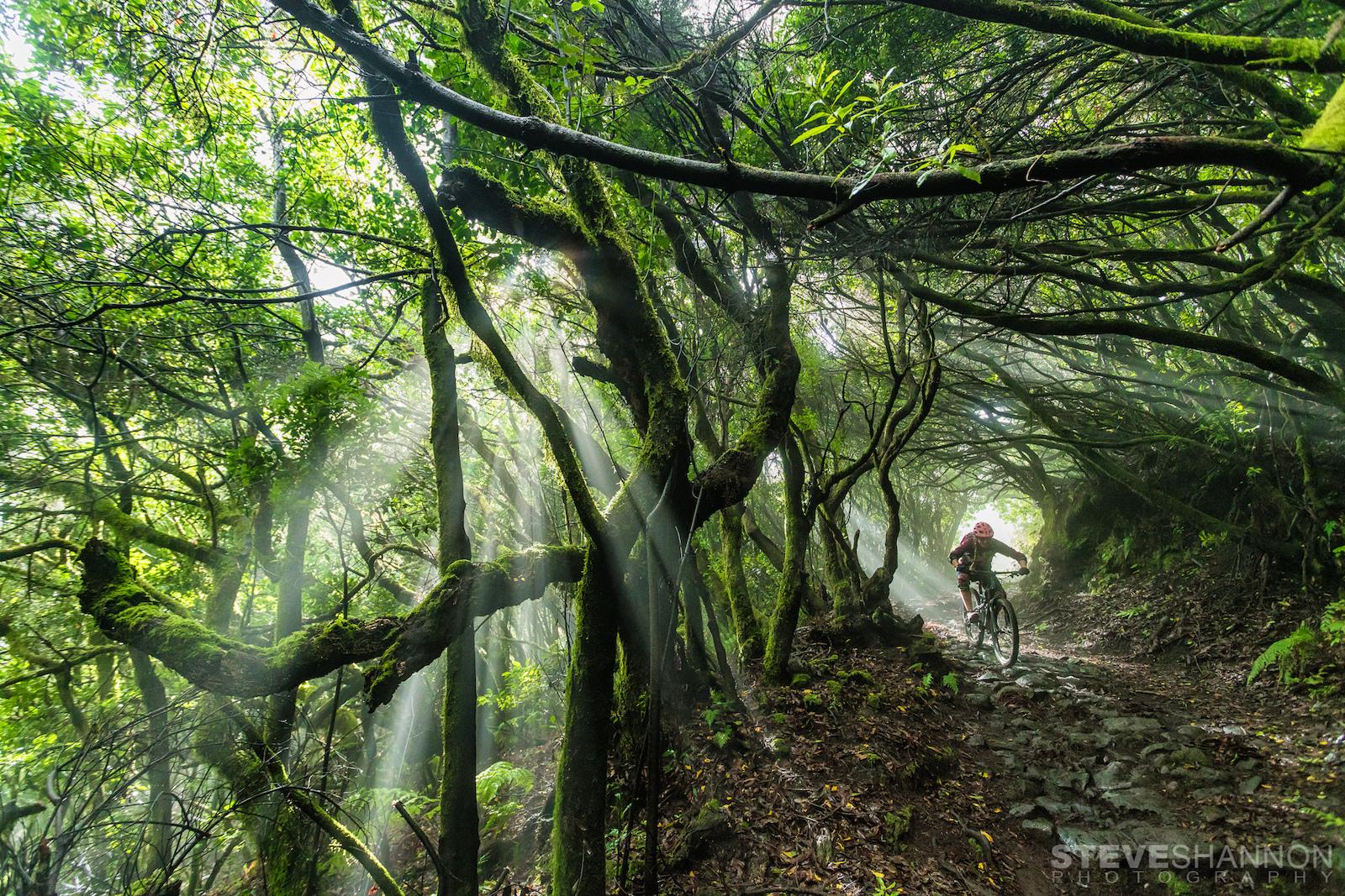 Jungle magic on La Palma.