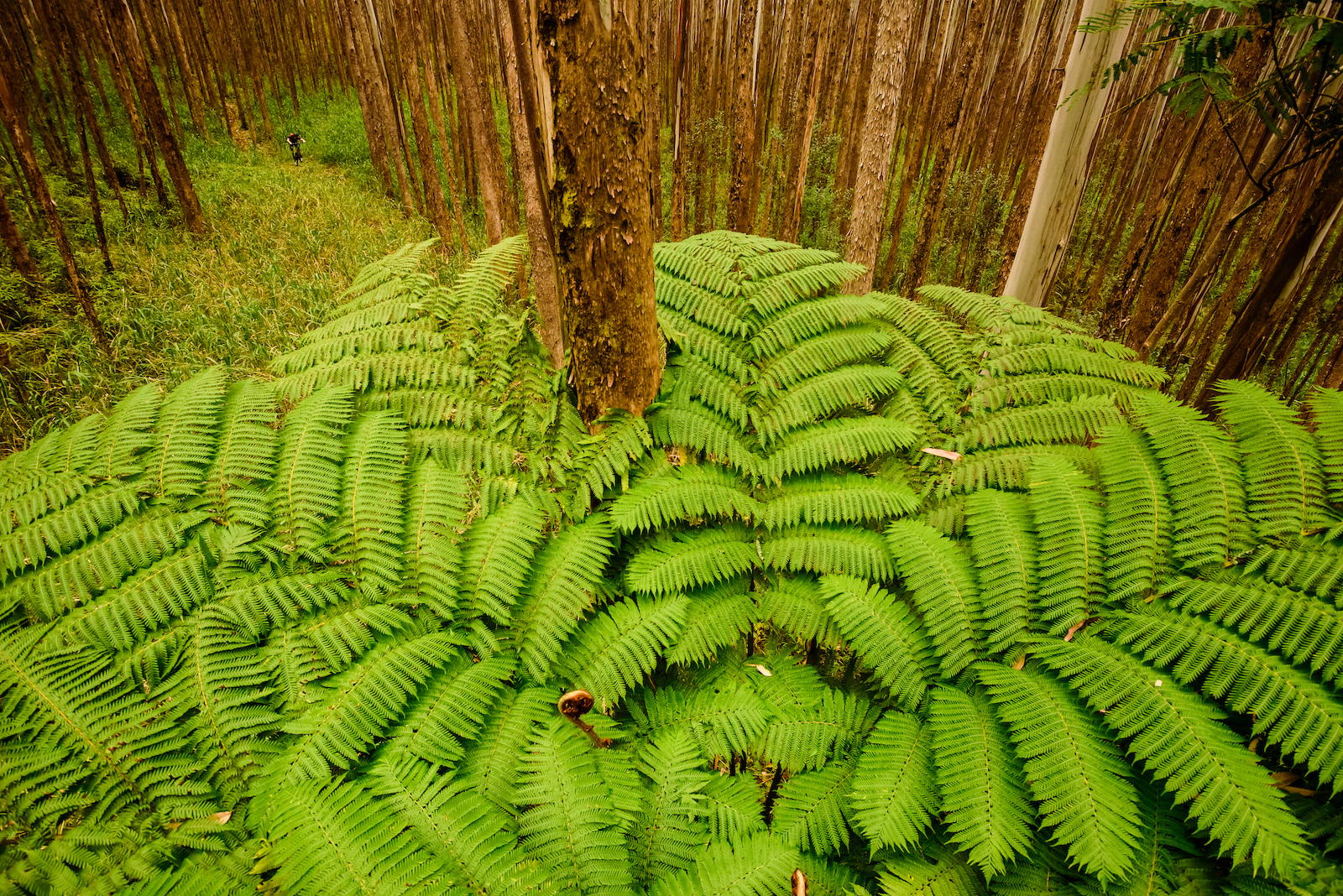Jurassic ferns Image by Bruno Long