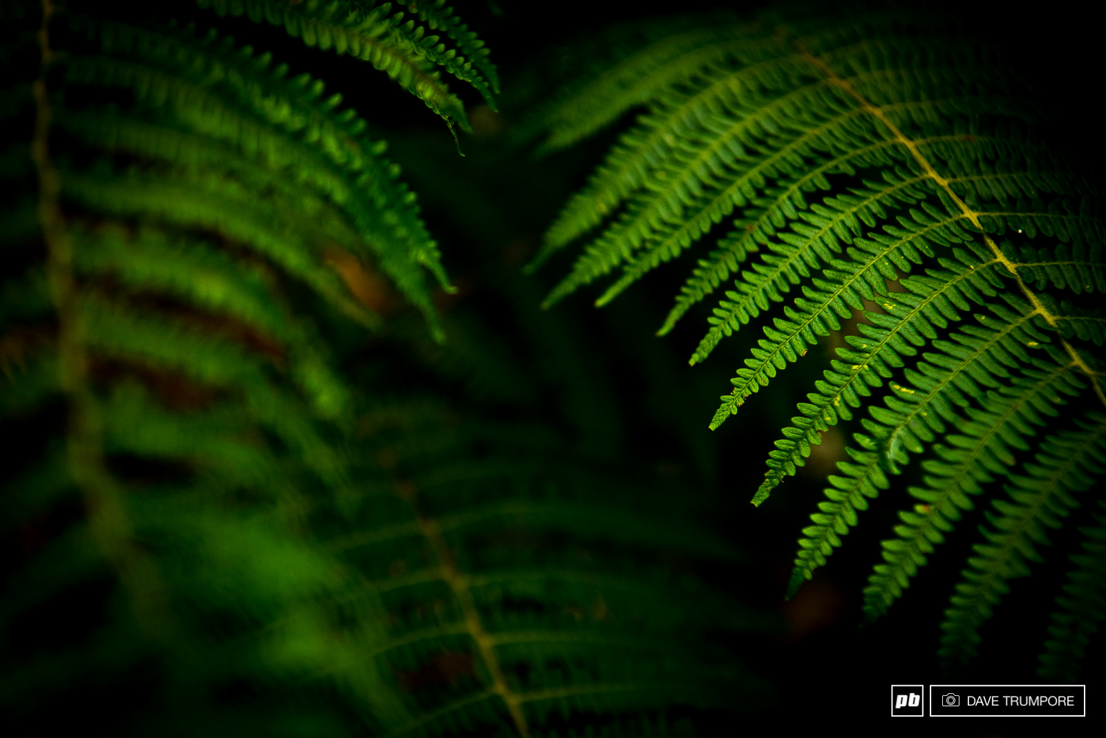 Anytime you see ferns this big and green you can be sure that it rains and rains often.