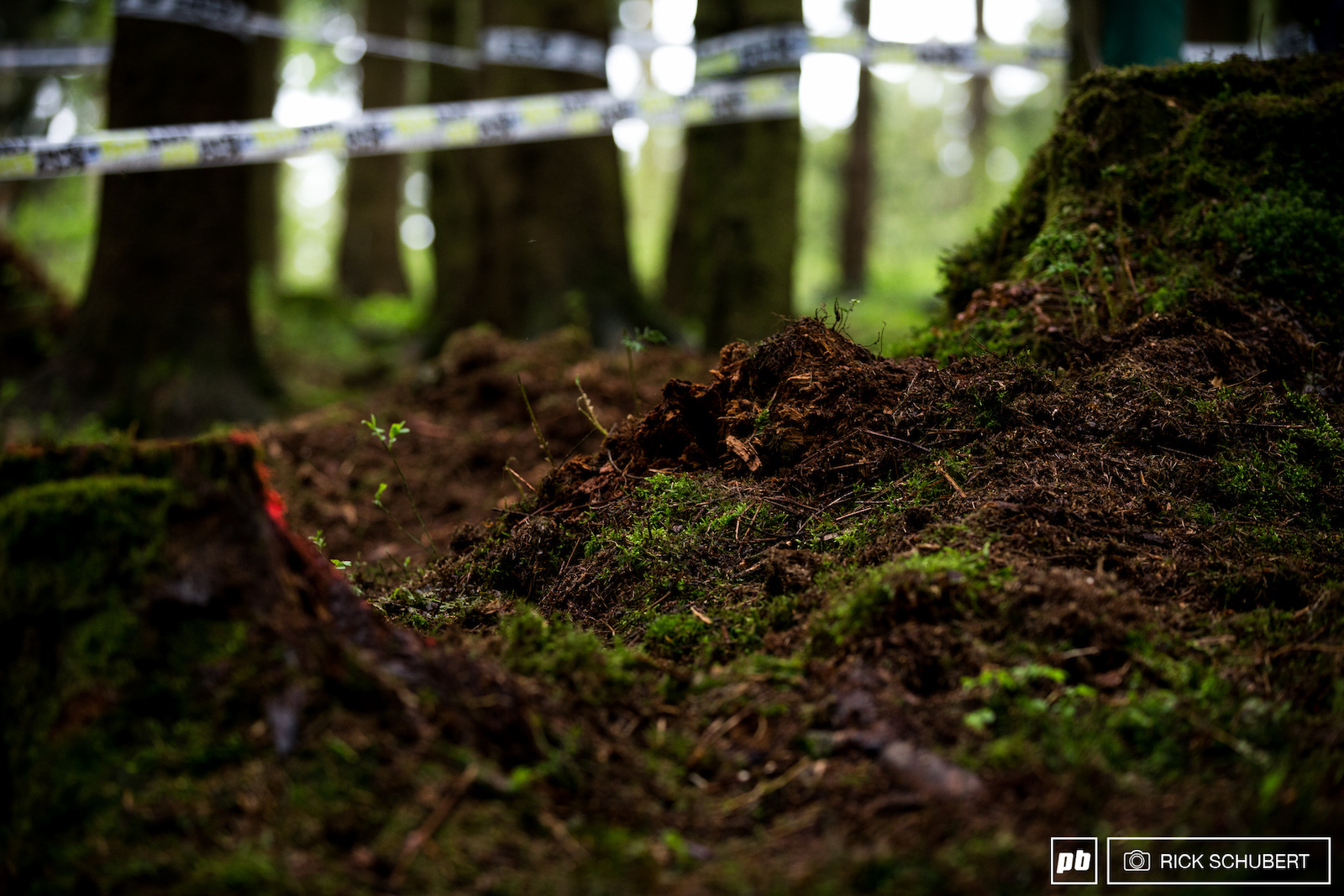 Fresh loam in the woods