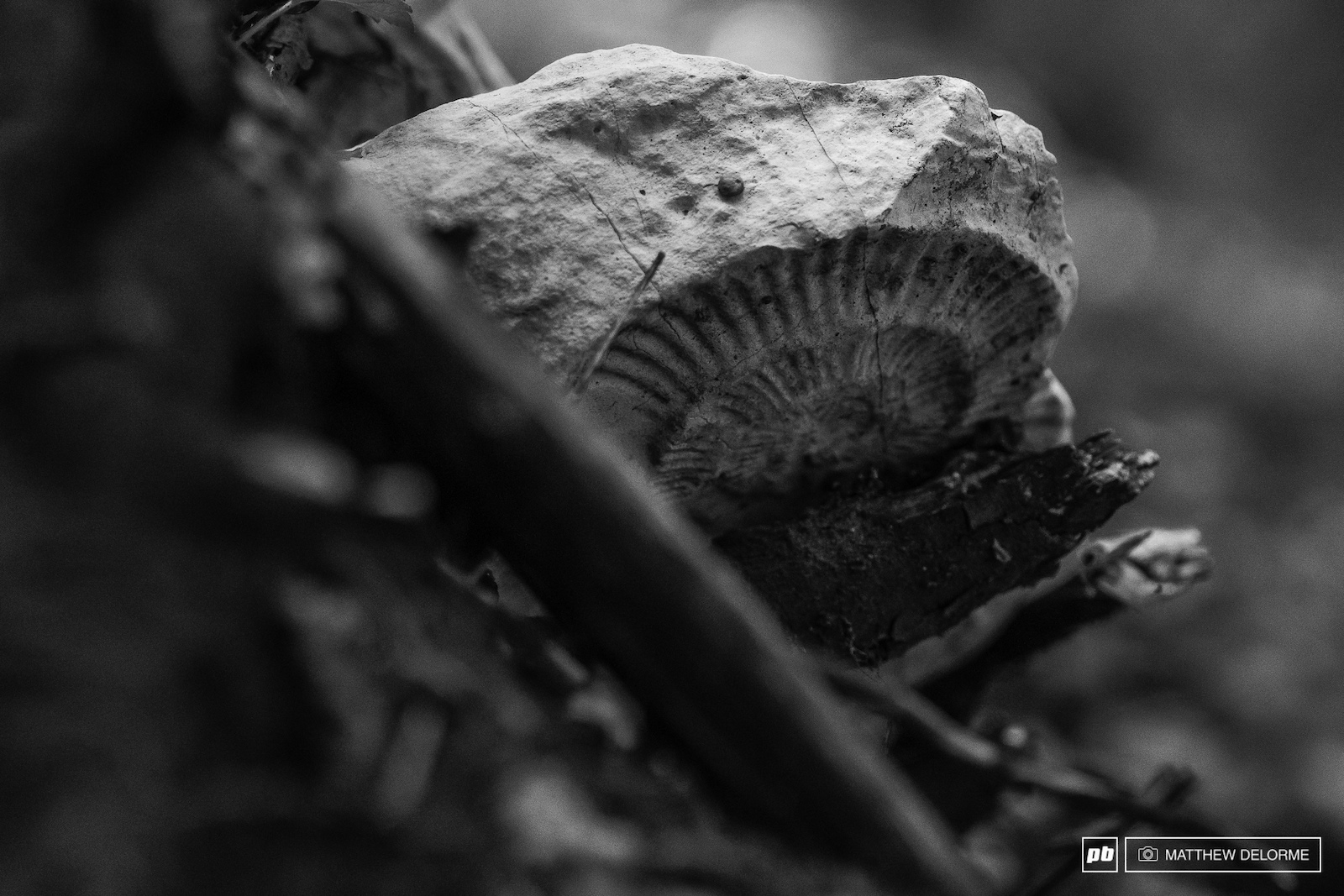 There are fossils everywhere through out the woods.