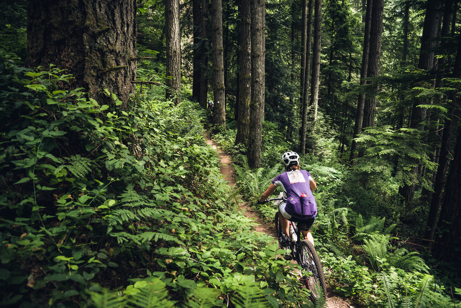 Looking for singletrack The trails around Sechelt have it in abundance. Come her and get tickled by the foliage.