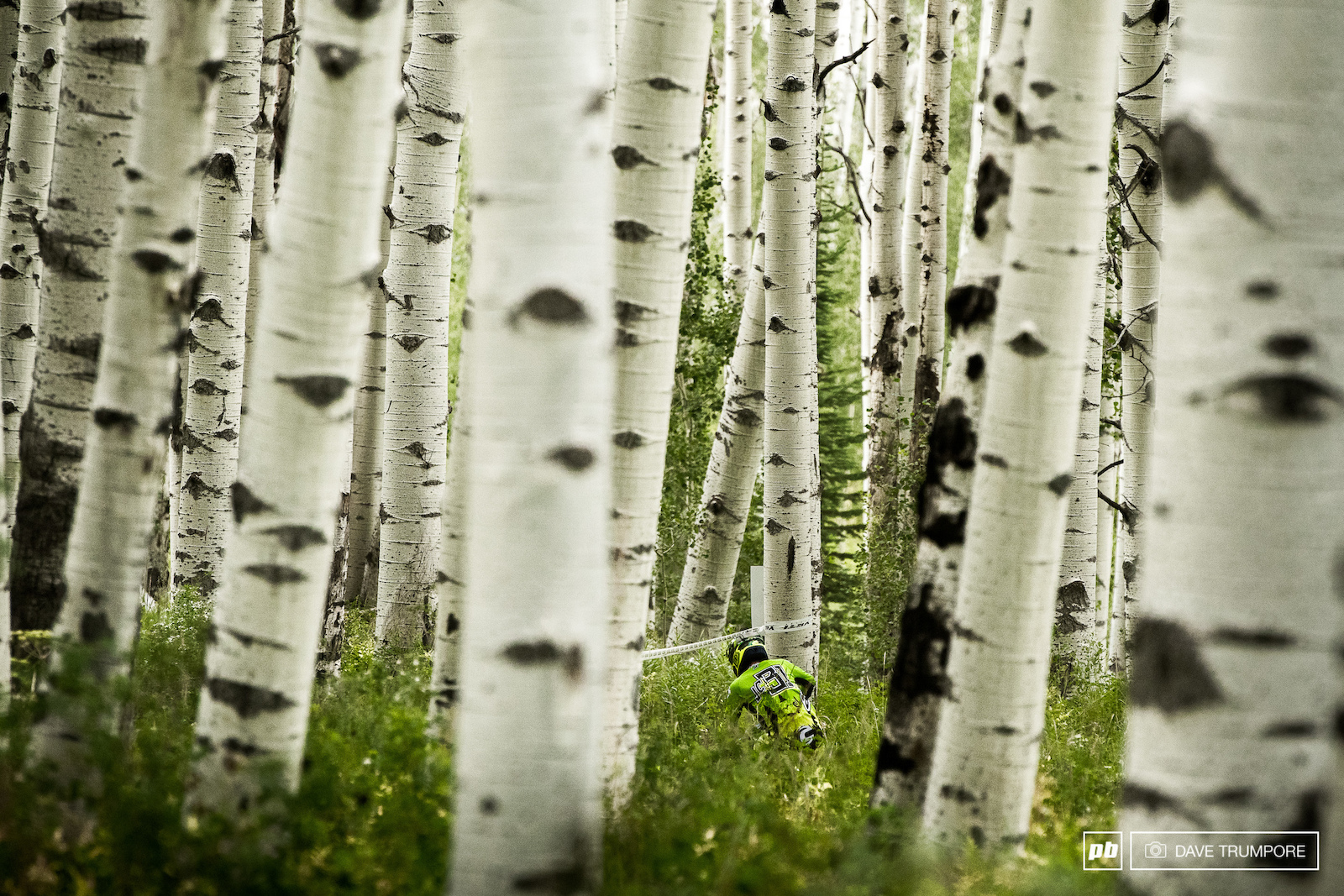 Jerome Clementz dwarfed by some massive aspen trees at the bottom of stage 4.