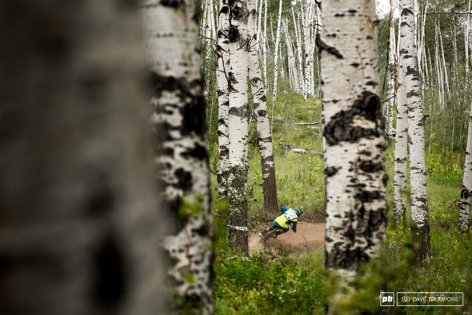 Threading the needle through the aspen trees.