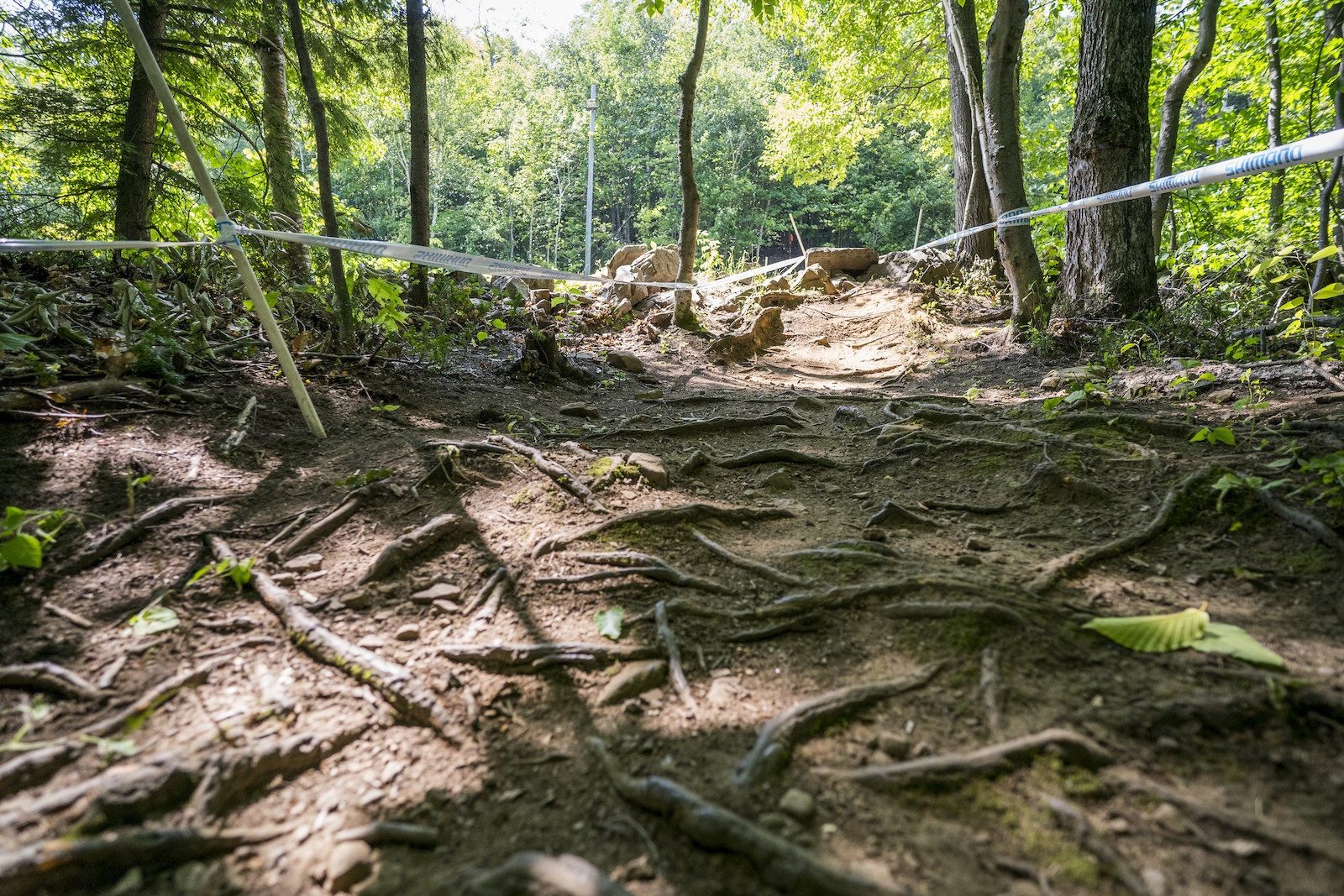 Beds of roots. All the chatter one needs to justify a full suspension bike on this course.