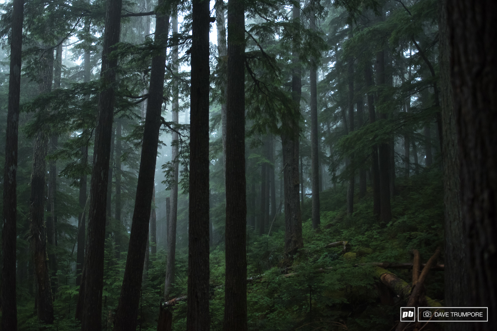 It was classic Whistler scenery in the woods for the first stage of the day.